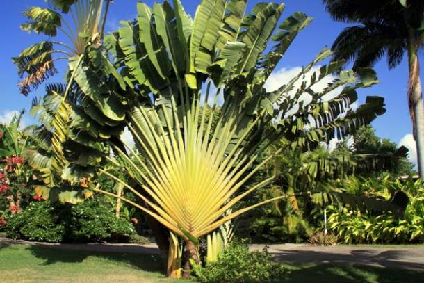 Beau Le Jardin Tropical Guadeloupe 2 Palmiers