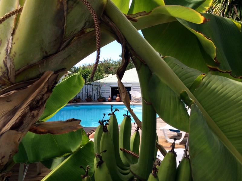 Du régime de bananes à la piscine