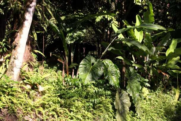 location-villa-guadeloupe-tronc